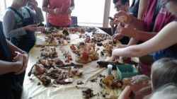 Atelier de mycologie